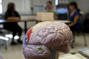 brain injury study
